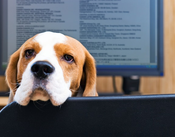 Make Dog Beds Your New Office Accessory for TYDTWDay