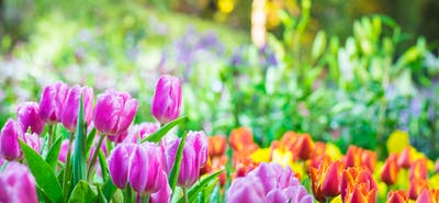 Spring into Action: Free Ideas for the New Season